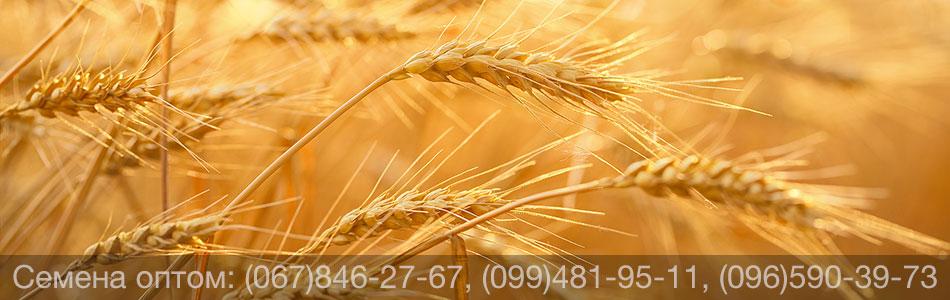 Купить семена оптом – покупка семян почтой, Украина