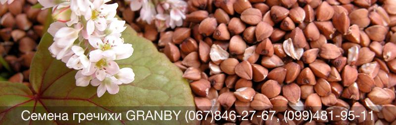 Купить семена канадской гречихи Гренби Granby элита в Украине. Семена почтой!