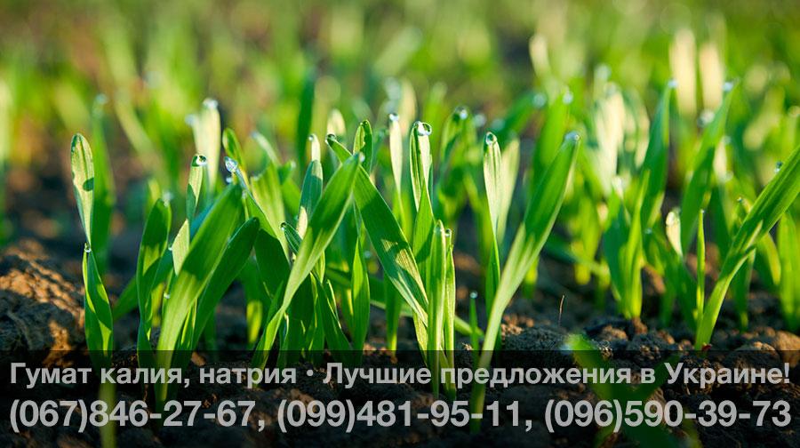 Купить гумат калия натрия в Украине – Цены, лучшие предложения!