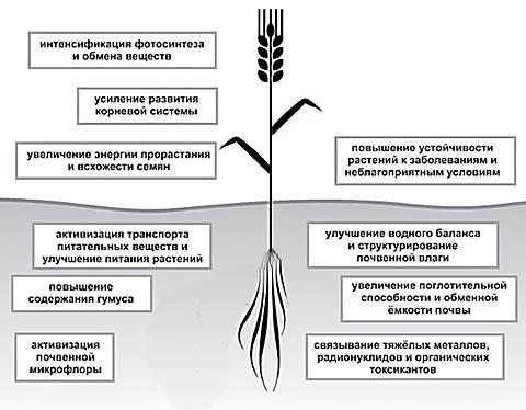 Купить гумат калия натрия в Украине – Эффективность гумата, воздействие на растения