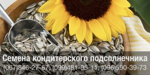 Купить семена подсолнечника кондитерских сортов