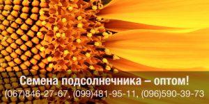 Купить семена подсолнечника оптом в Украине — канадские семена