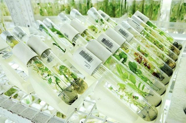 Ученые нашли способ увеличения урожайности