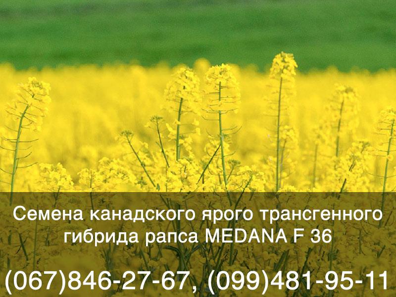 Предлагаем купить семена рапса в Украине — канадский гибрид ГМО, высокоурожайный доходный рапс для зон рискованного земледелия