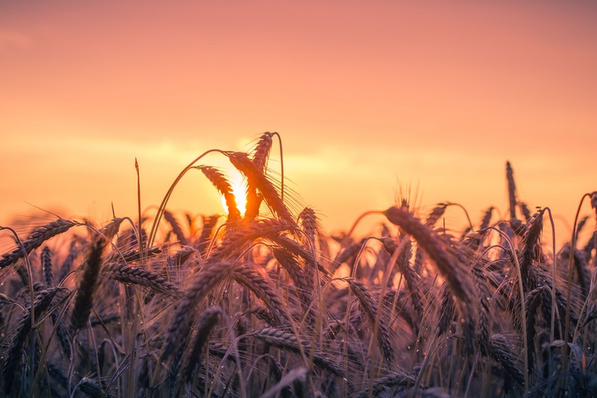 Что будут сеять украинские аграрии в 2018 году