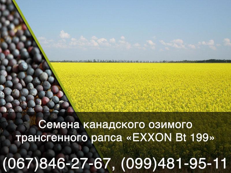 Семена озимого рапса — трансгенный канадский гибрид EXXON Bt 199