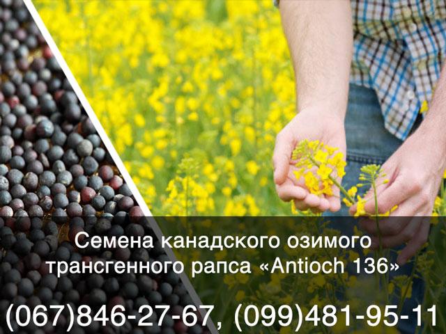 Купить семена озимого рапса в Украине — Канадский озимый рапс Antioch 136