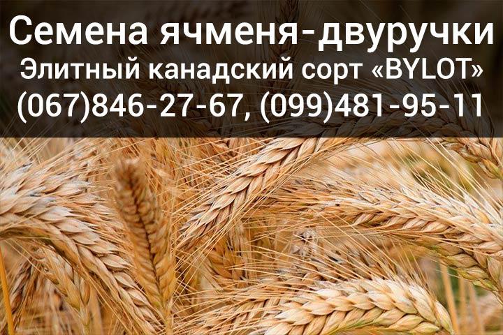 Купить семена ячменя в Украине - Канадский сорт BYLOT