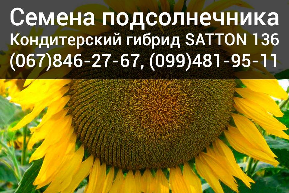 Купить семена подсолнечника – канадский гибрид SATTON 136