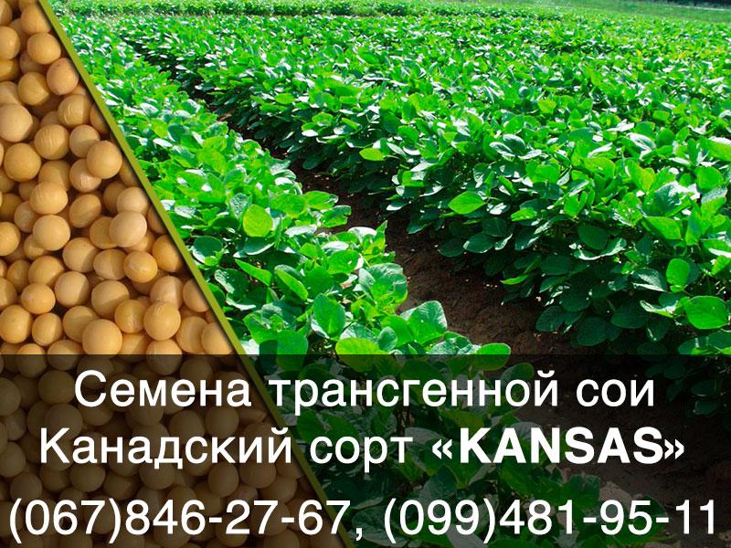 Семена сои канадского трансгенного сорта КАNSAS Bt (под Раундап)