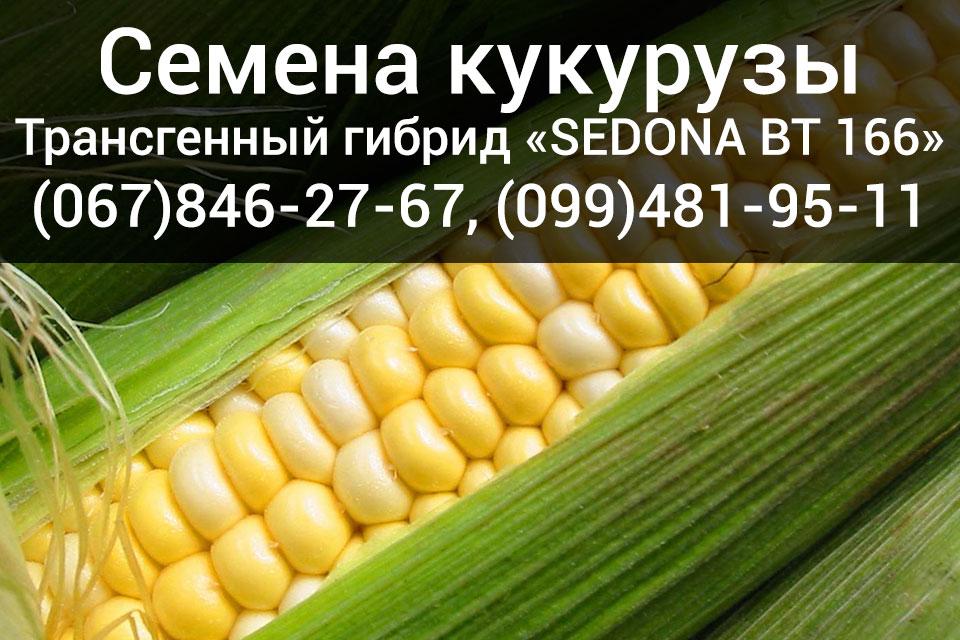 Семена кукурузы канадского трансгенного гибрида «SEDONA BT 166»