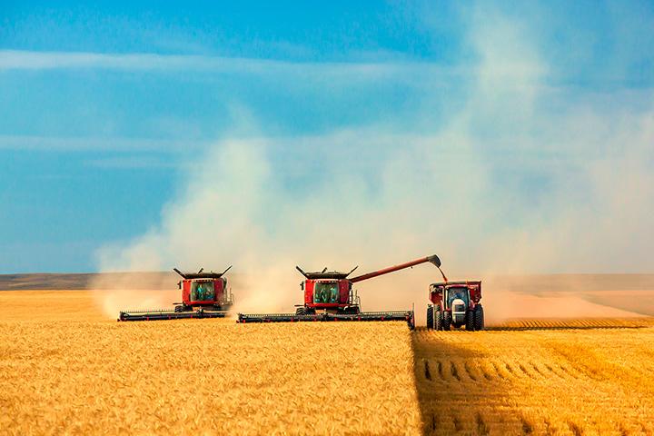Каким будет урожай в 2019 году?