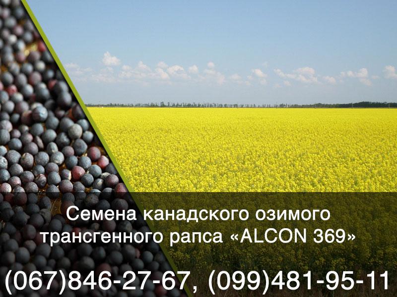 Семена озимого рапса — канадский генно модифицированный (ГМО) гибрид ALCON 369