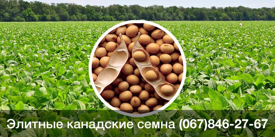 Купить семена сои — канадский трансгенный ГМО сорт OLDHAM Bt