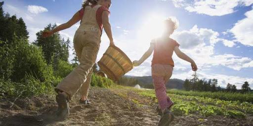Як обрати спрощену систему оподаткування сімейному фермерському господарству